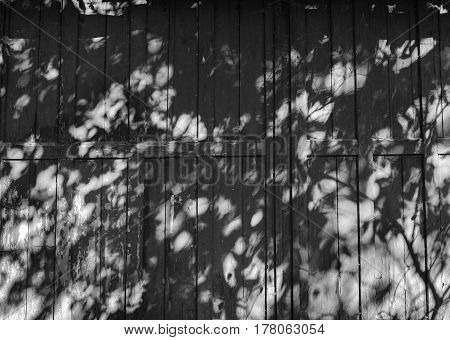 Tree Leaves Shadow On Red Wall Background, Black And White