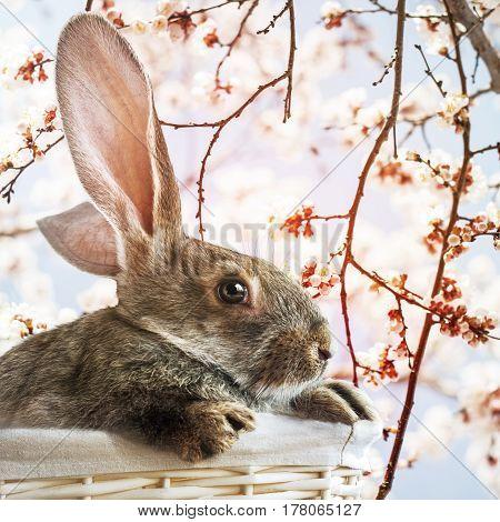 Easter Rabbit In White Basket On Spring Background