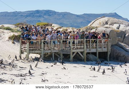 Cape Town South Africa - March 07 2017: Tourists at Boulders penguin colony Simonstown