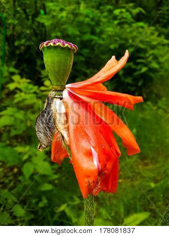 Orange Flower with Falling Petals stock photo