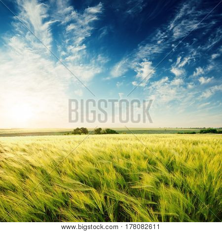 deep blue sky in sunset over green agricultural field
