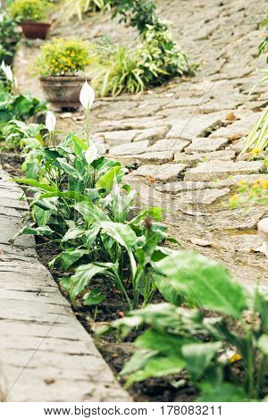 Old brick footpath in garden. Garden stone path with red bricks green grass and yellow flowers