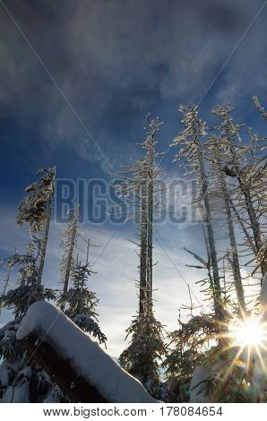 view on deadwood in winter by Harz mountain