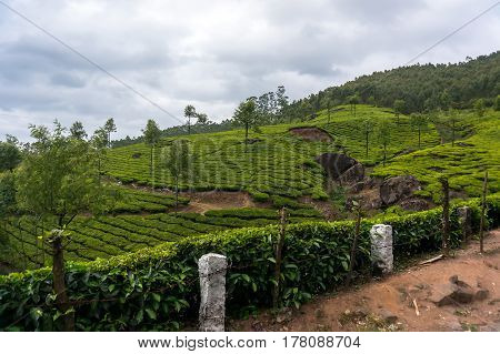 Kerala India Travel Background - Panorama Of Green Tea Plantations