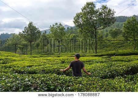 Man walks through tea plantations in the mountains of the bride in green tea and admires. Tourist in Munnar Kerala India.