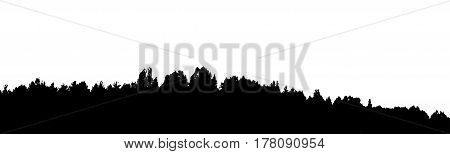 Black forest silhouette. Isolated on white background. Vector illustration for your design