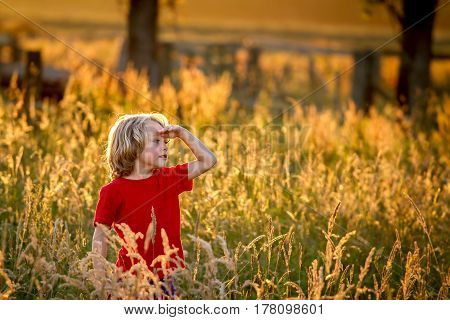 cute blonde haired 5 year old caucasian boy standing in a field at sunset being backlit by the setting sun.