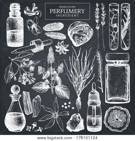 Vector collection of hand drawn perfumery materials and ingredients sketch. Vintage set of aromatic plants for perfumes and cosmetics on chalkboard