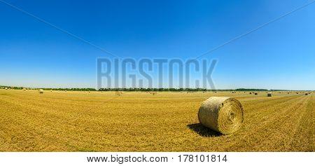 Panorama. Wheat field in Krasnodar, Russia. Summer, 2016