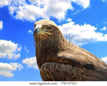 Skeptical Eagle On Sky Background.