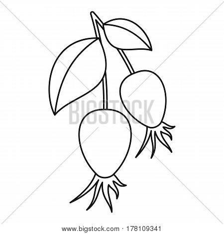 Dogrose berry bunch icon. Outline illustration of dogrose berry bunch vector icon for web