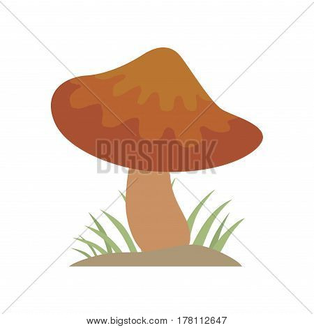 Poisonous brown mushroom nature food vegetarian healthy autumn edible and fungus organic vegetable raw ingredient vector illustration. Gourmet poison not eating drawing grow plant.