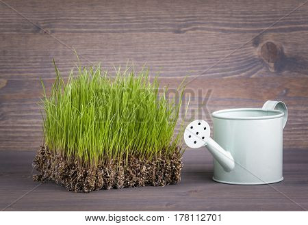 Green spring grass, symbol of spring or summer. abstract backround for bussines and development.