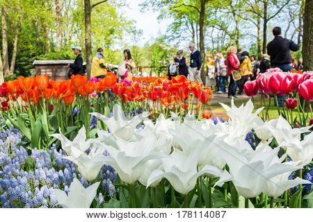 NETHERLANDS - MAY 10 2015: Blooming flowers with walking people in the background in Keukenhof park in Netherlands Europe