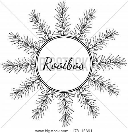 Rooibos tea plant leaf flower. Hand drawn ink sketch illustration lineart. Round frame. Herbal tea. Isolated on white background.