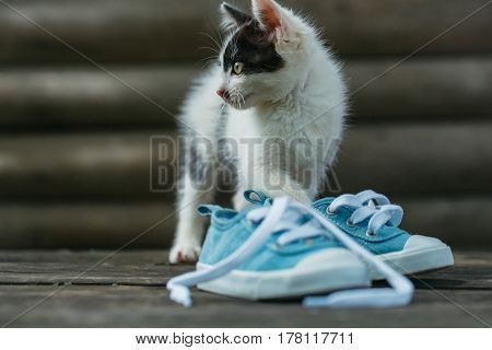 Cute kitten cat pet small domestic animal with furry coat black and white playing with blue gumshoes on wooden fence on sunny day outdoors on natural background