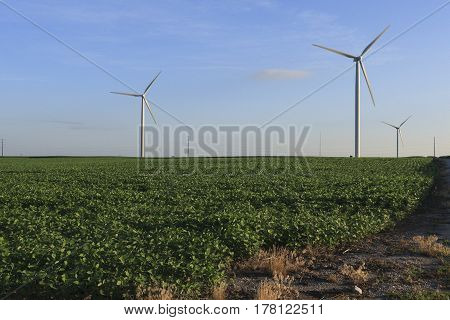 a farm for soybeans and electricity at dawn