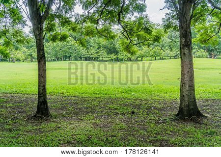 Beautiful Public green park at Vachirabenjatas Park (Rot Fai Park) Bangkok, Thailand