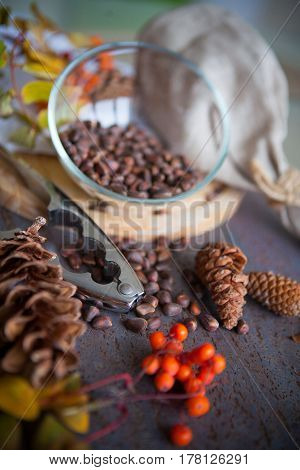 harvest of cedar cones and nuts in plate