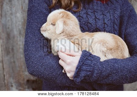 Close up of young woman with baby goat. Livestock at farm.