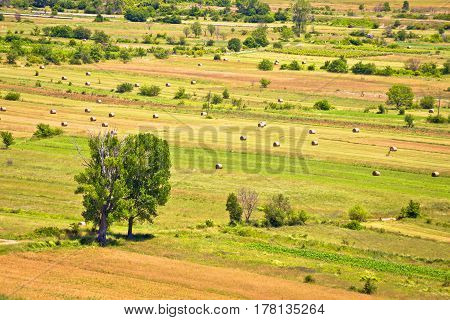 Summer Landscape Of Petrovo Polje