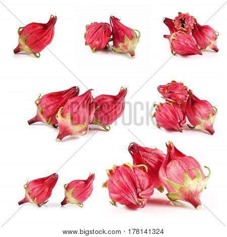 roselle isolated close up on white background .