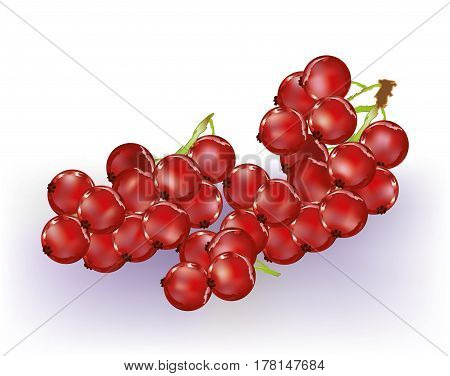Bunch of abstract red currents on white background