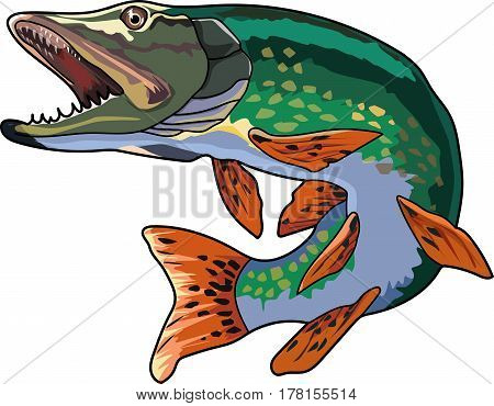 A green pike with a pointed snout and large teeth.