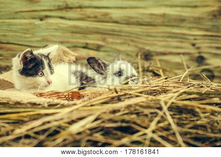 Cute Small Rabbit And Little Cat Lying In Natural Hay