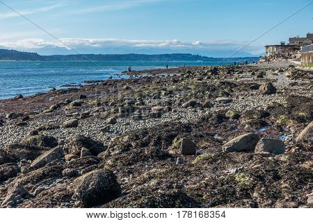 The tide is low revealing the seabed in West Seattle Washington.