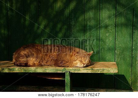 Gray cat sleeps on a green bench