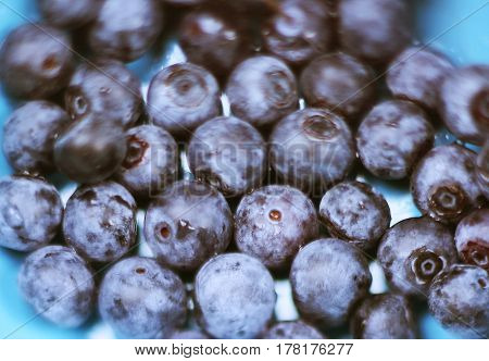 Blueberry Berries Close Up Photo