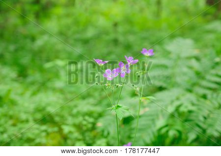 cute little flowers bloom in dense forest