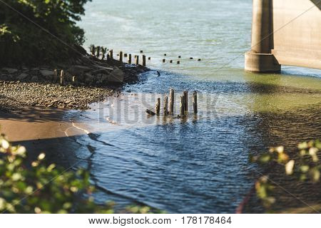 Wood Stumps In A River Underneath A Bridge