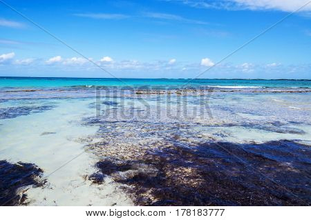 Crystal clear water over the sand of a tropical beach with algae, clouds, and the ocean horizon. New Providence Island, Nassau, Bahamas.