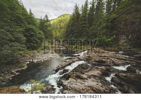 River In A Lush Forest