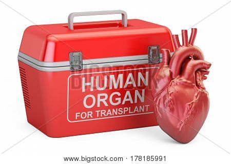 Portable fridge for transporting donor organs with human heart 3D rendering