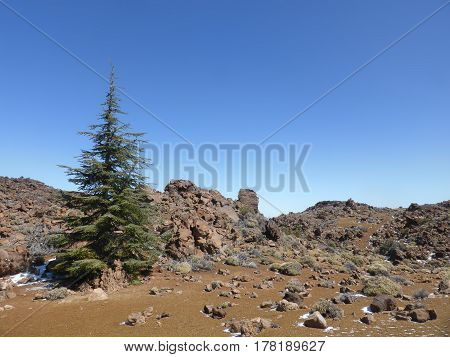 Fir Tree Mountain Landscape Panorama