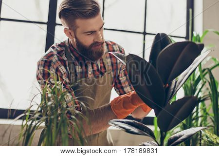 Handsome Attentive Florist With Red Beard Taking Care Of Plants