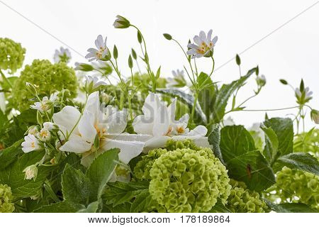 Various spring flowers with water deops on white background