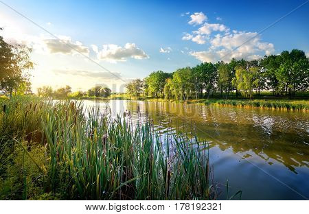 Morning on a beautiful river in summer
