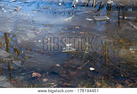 Thaw in the park. Puddle with melting ice shards. Reflection of the sky and trees in the water. Horizontal photo.