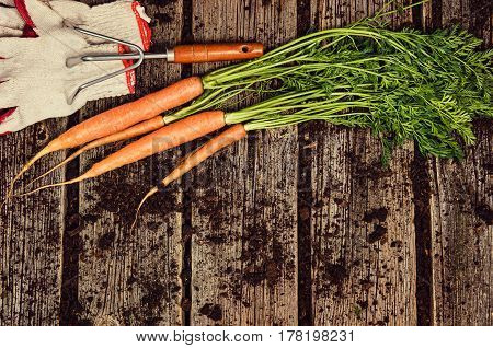 Raw, natural food background. Vegetables, carrot top view on old wooden desk background. Photograph taken from above, with dirt, soil, vintage planks