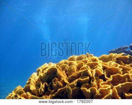 Triple Divers