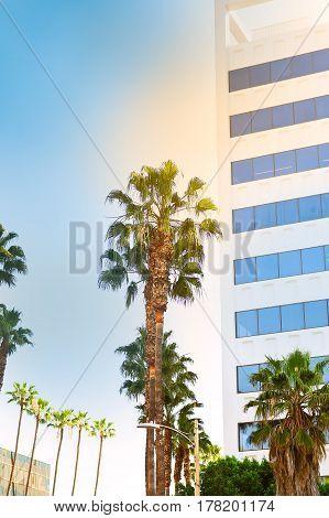 Palm Trees Against Blue Sky Nature Landscape.  city Los Angeles