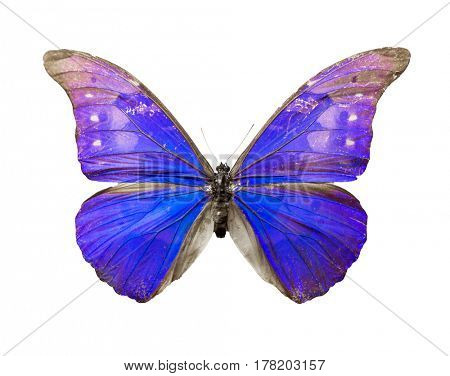Color butterfly isolated on white background