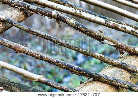 Natural background - a fence made of logs of pine. Rough raw thin pine logs.