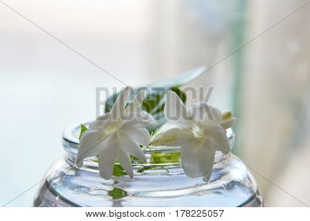 jasmine on the water in glass bottle