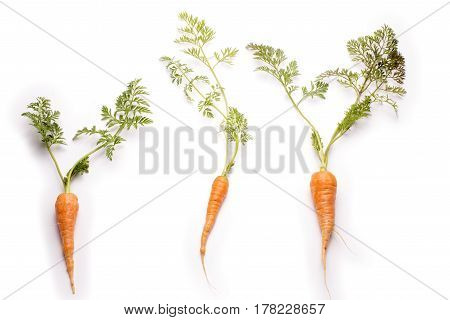 Three thin carrots with a leaf on a white background