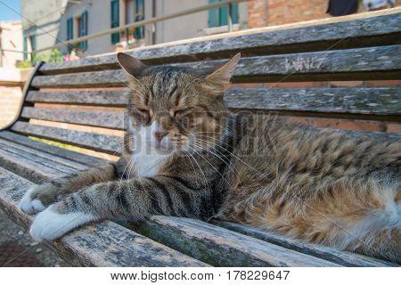 Big tabby cat sitting on sunny bench in Santarcangelo Italy